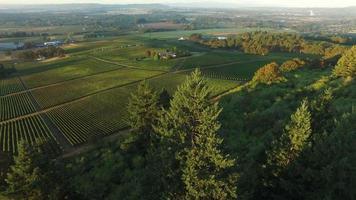 vista aérea, de, viñedo, willamette, valle, oregon video