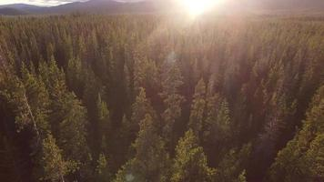 Sunset aerial view of Oregon forest video
