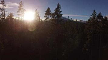 Aerial view of Oregon forest and Mt. Bachelor video