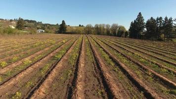 Aerial view of farm rows video