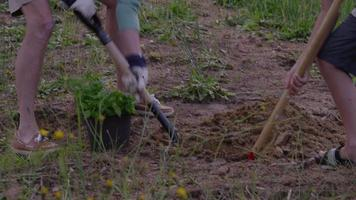 Senior woman and grandson planting a plant video