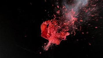 leuchtend rote Rose explodiert in Superzeitlupe, aufgenommen mit Phantom Flex 4k video