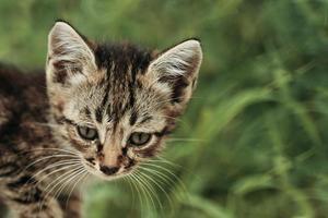 Sad tabby pussycat in the grass photo