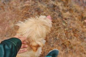 hombre acariciando perro foto