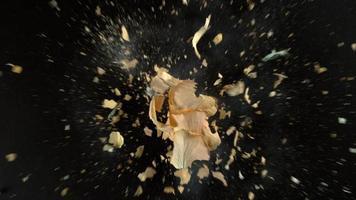 gelbe Rosenblume explodiert in Superzeitlupe, aufgenommen mit Phantom Flex 4k video