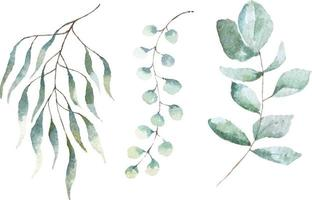 Watercolor painted botanical set vector