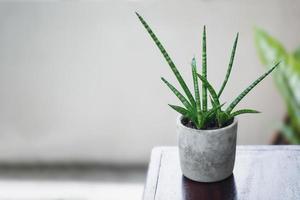 planta de serpiente cilíndrica foto
