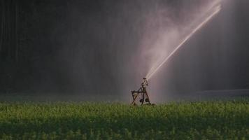 aspersão de pulverização de campo agrícola em oregon. video