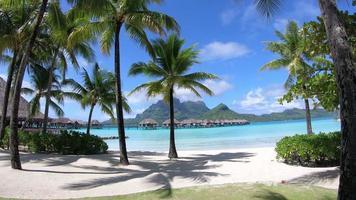 palme al resort a bora bora, Polinesia francese. video