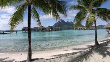 palmeiras no resort em bora bora, polinésia francesa. video