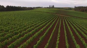 Vista aérea de la vendimia en el viñedo de Oregón video