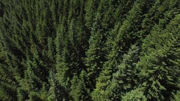 Aerial shot of forest, Oregon video