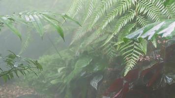 chovendo em lindas folhas de samambaia tropical verde-esmeralda video