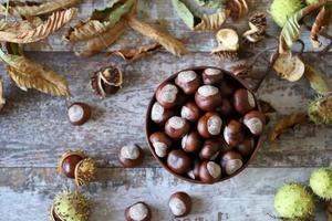 castañas y castaños en otoño foto