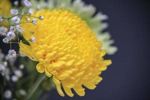 Primer plano de crisantemo amarillo en un jarrón con flores de crisantemo foto