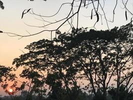 Sunset breaks between the trees photo
