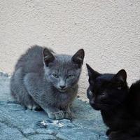 hermoso retrato de gato callejero foto