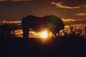 horse silhouette in the sunset photo