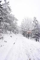 nieve en el bosque en temporada de invierno foto