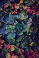 Fondo de textura de hojas multicolores foto