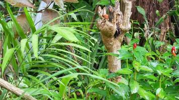 Vista del paisaje mientras llueve en el árbol con flor de árbol tropical con lluvia video