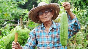 retrato feliz agricultor masculino com chapéu de palha segurando abobrinha fresca na fazenda vegetais orgânicos video