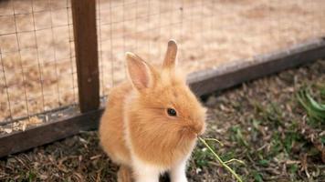 lindo conejito marrón comiendo gloria de la mañana en una jaula de madera conejito de pascua video