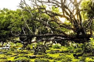 bosques cubiertos de musgo en la hora dorada foto