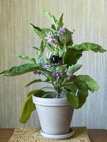 berenjena con flores y berenjena en desarrollo foto