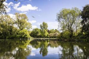 lago de los cisnes, Dublín, Irlanda foto