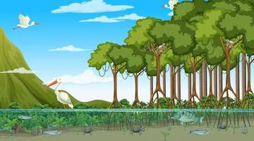 Animals live in Mangrove forest at daytime scene vector