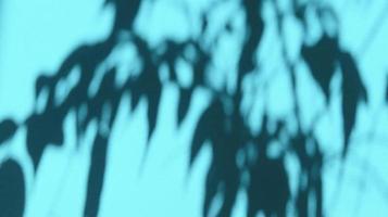 deja sombras sobre papel azul pastel. fondo abstracto. foto de stock.