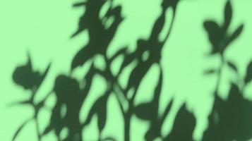 deja sombras sobre papel de textura verde pastel. fondo abstracto. foto de stock.