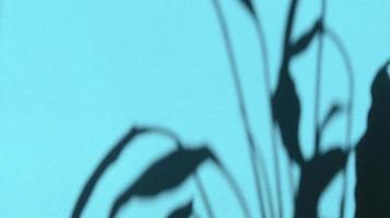 deja sombras sobre papel de textura azul pastel. fondo abstracto. foto de stock.