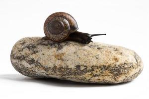 Caracol de vid en la pila de piedras de spa contra el fondo blanco. foto