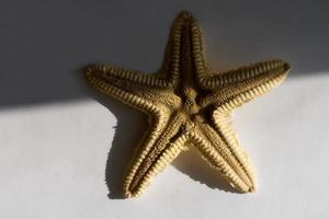 beautiful starfish on a white background, half in the shade, background image photo