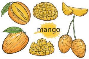 Mango set. Exotic tropical juicy bright summer fruits vector