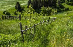 valla de madera y pasto alto foto