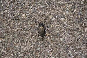 Insect on asphalt photo