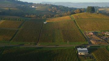 video aéreo del valle de willamette, viñedos de oregon en color de otoño 4k ultra hd