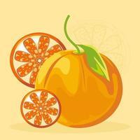 tropical fruit oranges vector