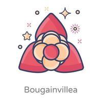 Bougainvillea Ornamental plant vector