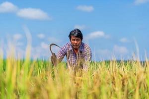 Granjero asiático que trabaja en el campo de arroz bajo un cielo azul foto