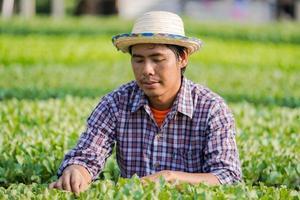 Agricultor asiático con sombrero comprobando las plántulas jóvenes en su granja en el huerto foto