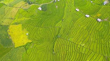 Aerial view of the green terraced rice fields landscape different pattern at morning in the northern thailand photo