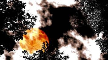 volle bloedmaan stijgt terug silhouet top bomen aan de nachtelijke hemel en wolk snel bewegende time-lapse video