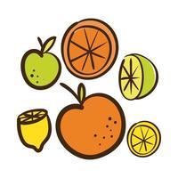set citrus fruit flat style icon vector