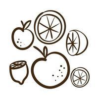 set citrus fruit line style icon vector