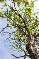 rama con hojas verdes foto