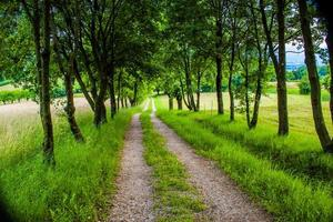 Path in a meadow photo